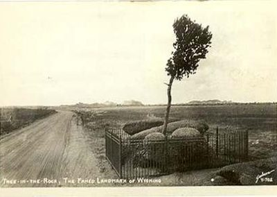 vedauwoo tree - past
