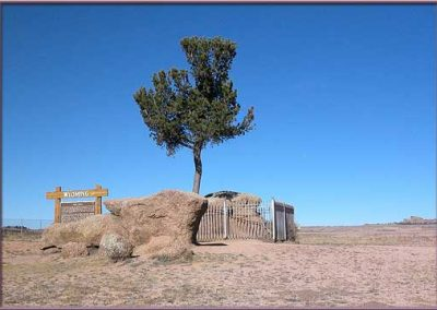 vedauwoo tree - now